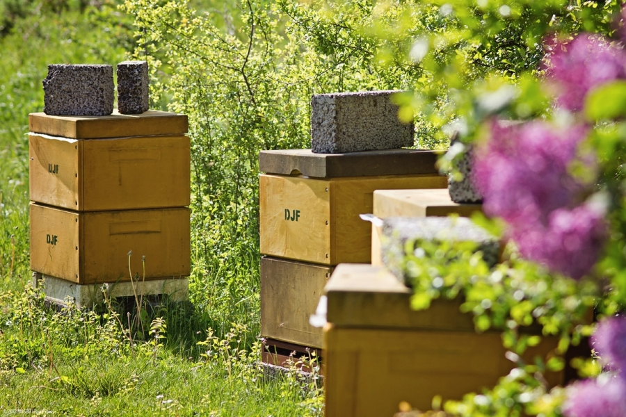 In and around the hive
